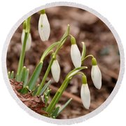 Snow Drops Round Beach Towel