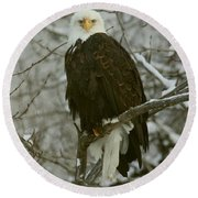 Round Beach Towel featuring the photograph Snow Eagle by Myrna Bradshaw