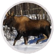 Round Beach Towel featuring the photograph Snow Moose by Doug Lloyd