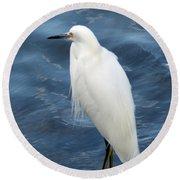 Snowy Egret 1 Round Beach Towel