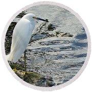 Snowy Egret 2 Round Beach Towel by Joe Faherty