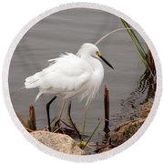 Round Beach Towel featuring the photograph Snowy Egret by Kay Lovingood
