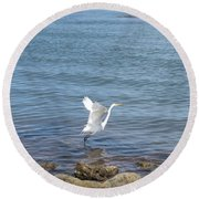 Round Beach Towel featuring the photograph Snowy Egret by Marilyn Wilson