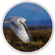 Snowy Owl 1b Round Beach Towel