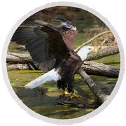 Round Beach Towel featuring the photograph Soaring Eagle by Elizabeth Winter