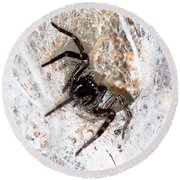 Spiders Trap Round Beach Towel