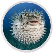 Spotted Porcupinefish IIi Round Beach Towel