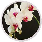 Spray Of White Orchids Round Beach Towel