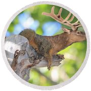 Squirrelk Round Beach Towel