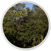 Stand Of Sugar Maple Trees Round Beach Towel