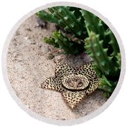 Round Beach Towel featuring the photograph Stapelia Variegata by Laura Melis