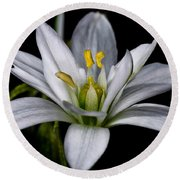 Star Of Bethlehem Round Beach Towel