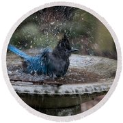 Stellar Jay In The Birdbath Round Beach Towel by Carol Ailles