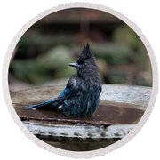 Steller Jay In The Birdbath Round Beach Towel by Carol Ailles