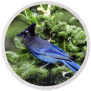 Stellers Jay Round Beach Towel by Sharon Talson