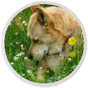 Stop And Smell The Clover Round Beach Towel