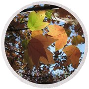 Round Beach Towel featuring the photograph Sun-lite Fall Leaves by Donna Brown