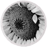 Round Beach Towel featuring the photograph Sunflower by Dan Wells
