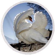 Swan In Backlight Round Beach Towel