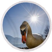 Swan Saying Hello Round Beach Towel
