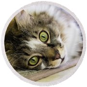 Tabby Cat Looking At Camera Round Beach Towel