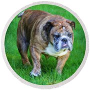 Round Beach Towel featuring the photograph The Bulldog Shuffle by Jeanette C Landstrom