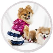 The Cute Pomeranian Dog Over White Round Beach Towel