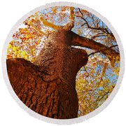 Round Beach Towel featuring the photograph The Deer  Autumn Leaves Tree by Peggy Franz