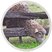 Round Beach Towel featuring the photograph The Grass...on The Other Side by Lydia Holly