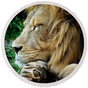 The Lions Sleeps Round Beach Towel