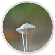 The Mushrooms Round Beach Towel