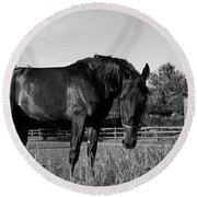 Round Beach Towel featuring the photograph The Stallion by Davandra Cribbie