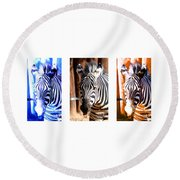 Round Beach Towel featuring the photograph The Three Zebras White Borders by Rebecca Margraf