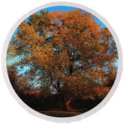 Round Beach Towel featuring the photograph The Tree Of Life by Davandra Cribbie