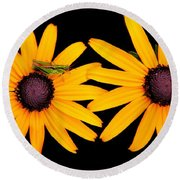 Round Beach Towel featuring the photograph The Yellow Rudbeckia by Davandra Cribbie