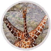 Three Headed Giraffe Round Beach Towel