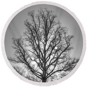 Through The Boughs Bw Round Beach Towel by Dan Stone