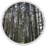 Through The Woods Round Beach Towel by Jeannette Hunt