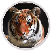 Tiger Blue Eyes Round Beach Towel