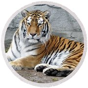 Tiger Resting Round Beach Towel