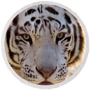 Tiger Stripes Exotic Animal Sanctuary 8 Round Beach Towel