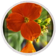 Round Beach Towel featuring the photograph Tiny Orange Flower by Debbie Portwood