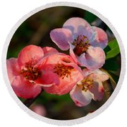 Round Beach Towel featuring the photograph Toyo Nishiki Quince by Kathryn Meyer