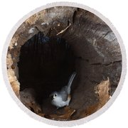 Tufted Titmouse In A Log Round Beach Towel by Ted Kinsman