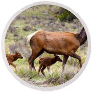 Twin Elk Calves Round Beach Towel