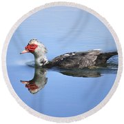 Round Beach Towel featuring the photograph Ugly Duckling by Penny Meyers