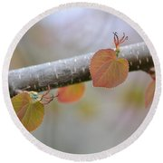 Round Beach Towel featuring the photograph Unfurling Buds In The Heart Of Spring by JD Grimes