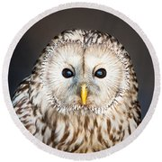 Ural Owl Round Beach Towel by Tom Gowanlock