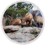 Wapiti Round Beach Towel