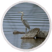 Round Beach Towel featuring the photograph Watchful by Eunice Gibb
